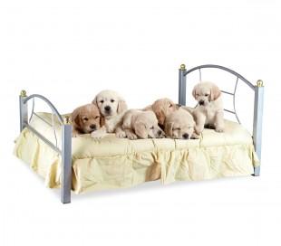 B236 Cama para perros y gatos SNOOPY hierro forjado 91 x 70 x 14.5 cm