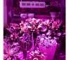 4373 Lámpara LED 1000W para cultivación en invernadero 100 LEDS de 10W cada uno