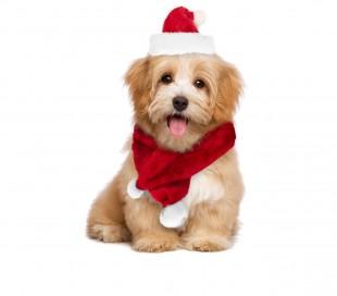 064227 Conjunto de bufanda y sombrero CHRISTMAS BABY ideal para perros pequeños