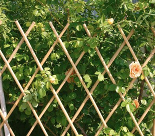 377505 Valla de bambú extensible para jardín jardín 30x240 cm