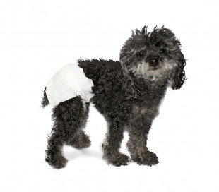 Pack 12 pañales absorbentes para perros capturan olores con ranuras para la cola